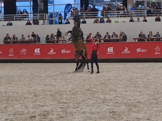 Spectacle de voltige au Normandie Horse Show